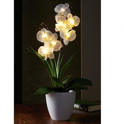 Orchidées lumineuses, Eclairage 5 LED - Sans entretien et durable